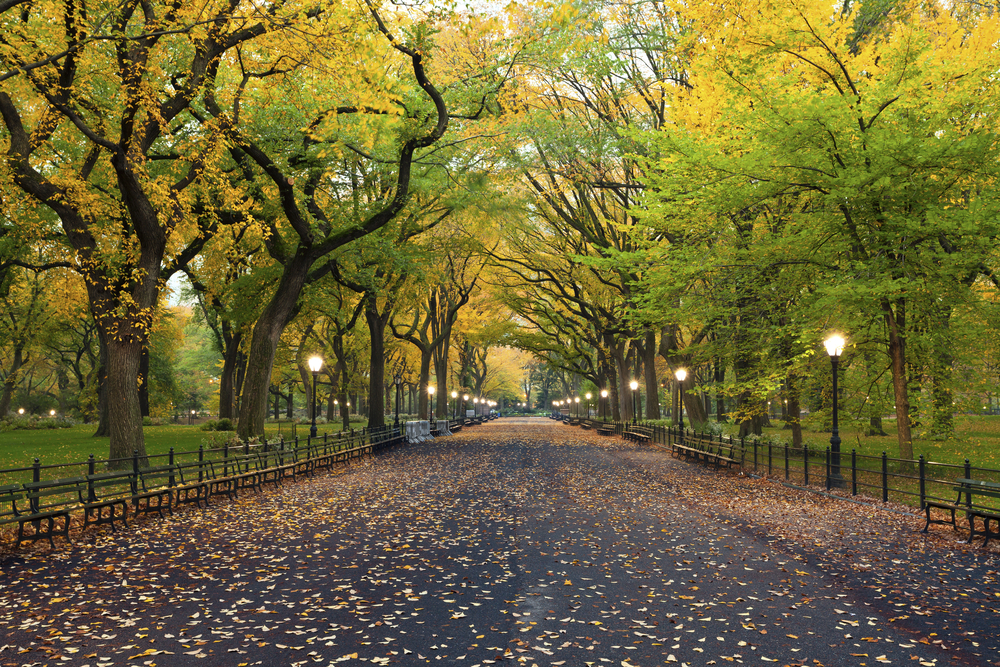 Top Things to Do in Central Park